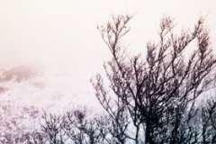 Как помочь птицам пережить холода? Особенности кормления городских птиц